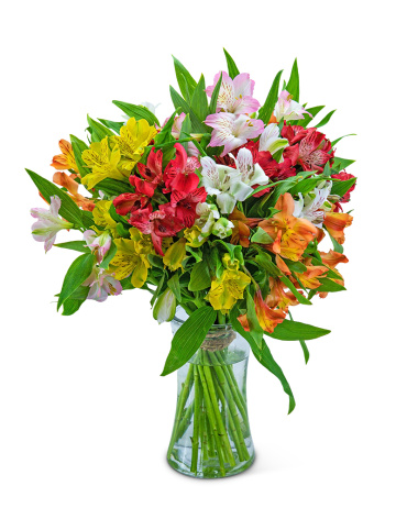 Cheerful Alstroemeria