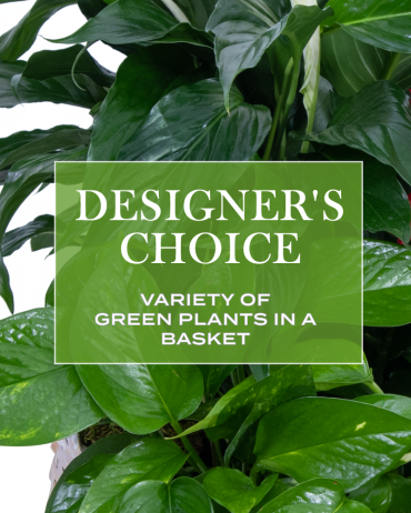 Designer\'s Choice - Variety of Green Plants in a Basket